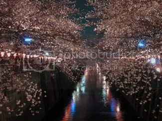 hanami by night