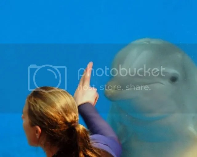 photo of a dolphin at the Baltimore aquarium