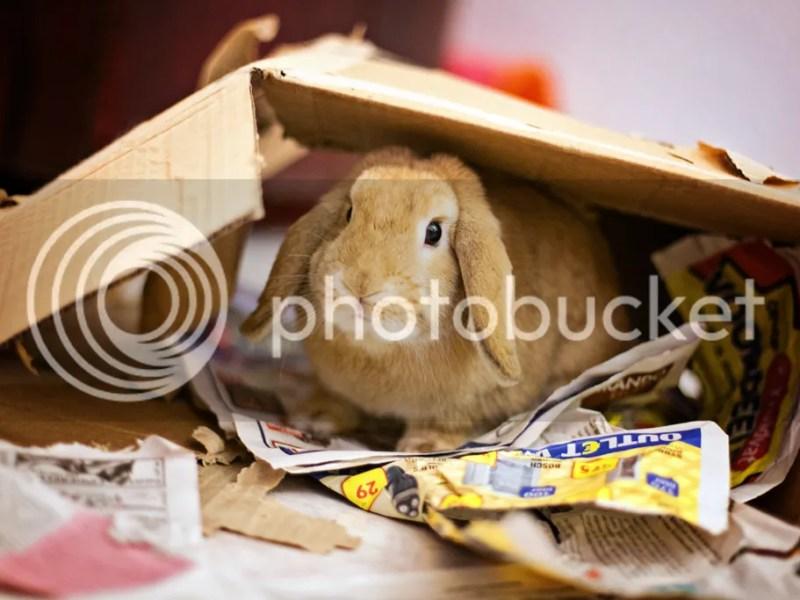 Speelgoed (voor) konijnen @ foreverpetite.net