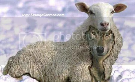 wolf in sheeps clothing photo: wolf in sheeps clothing Wolf-sheep.jpg