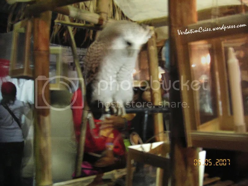owl, the other attraction