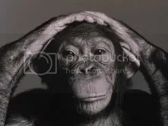 Chimp questioning