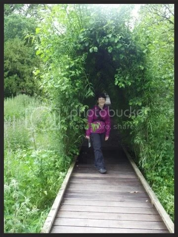 rosana bush