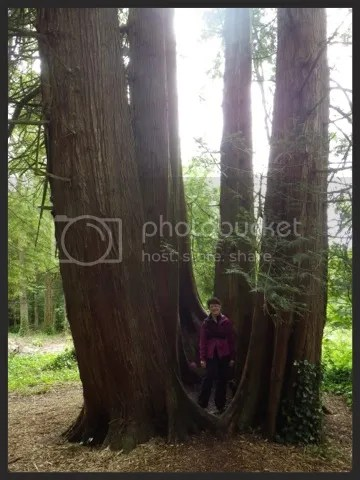 rosana tree portrait