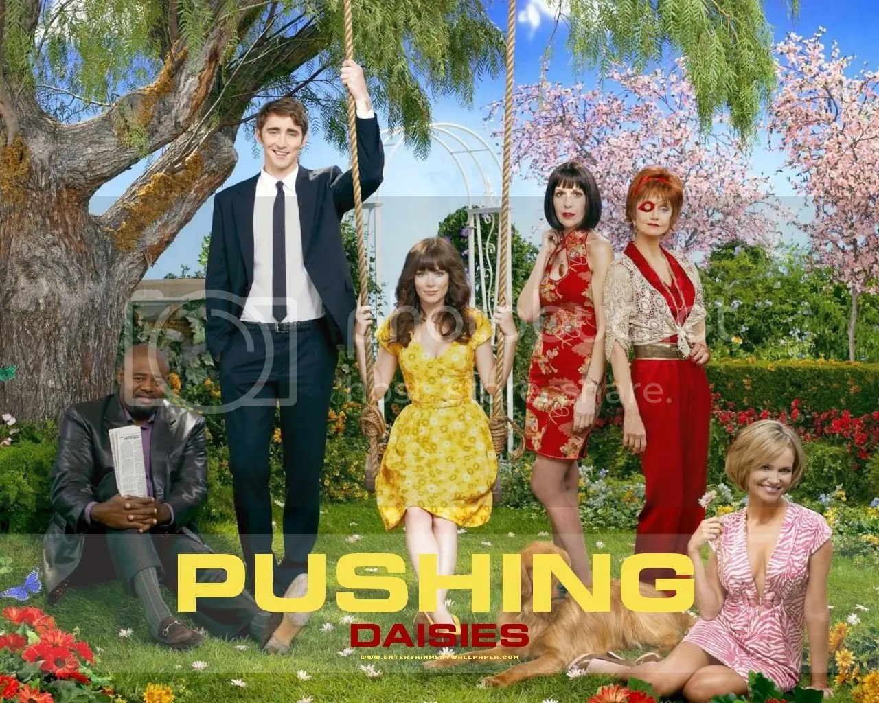 Pushing Daisies wallpaper