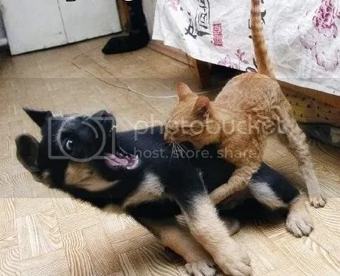 dog vs cat 2