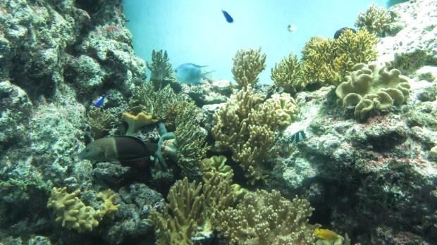 Kagoshima City Aquarium Kinko Bay