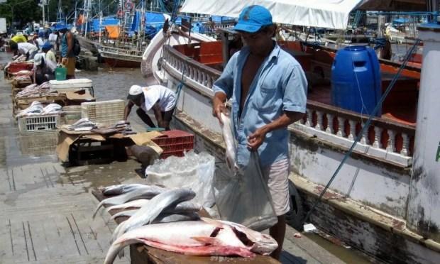 Belem Amazon fish