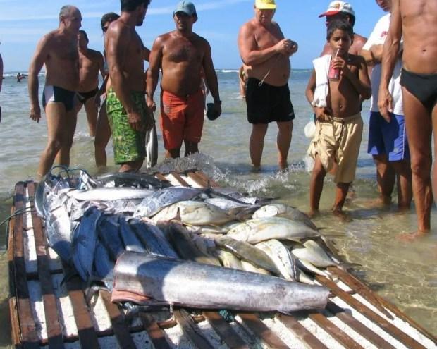 Fish at Pipa Brazil