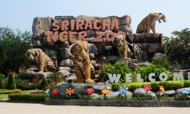 Siracha Tiger zoo near Pattaya