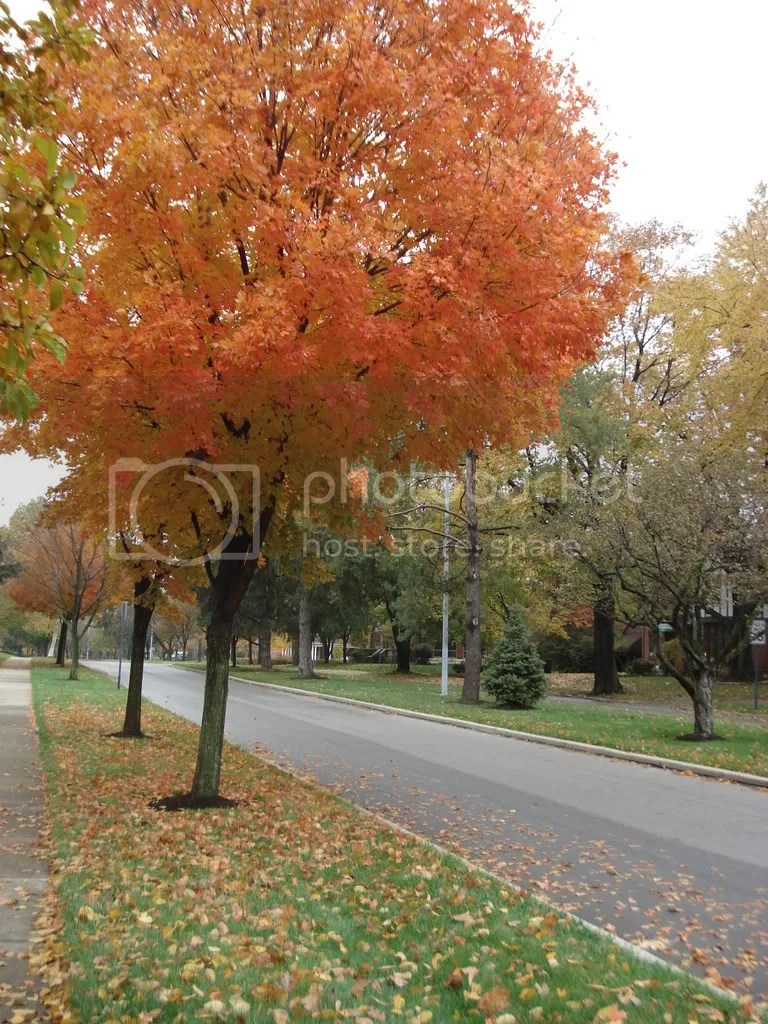 A tree lined street in Oakwood, Ohio