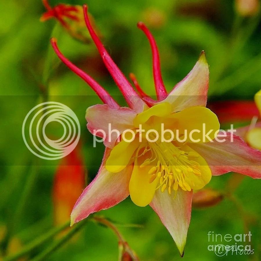 photo Red - yellow_zpsz5td4n2p.jpg