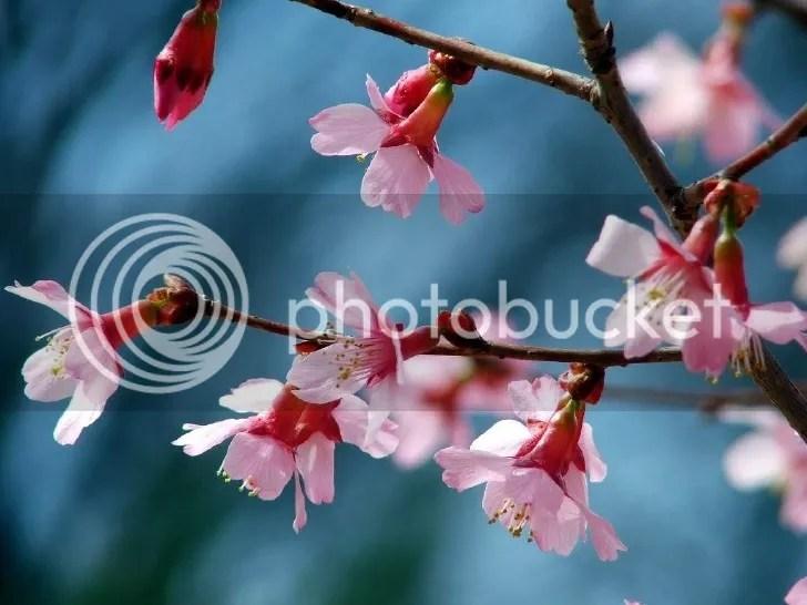 http://i216.photobucket.com/albums/cc273/HuynhHue_bucket/FLOWERS/Anh1110agraveo_zpsda3f5934.jpg~original