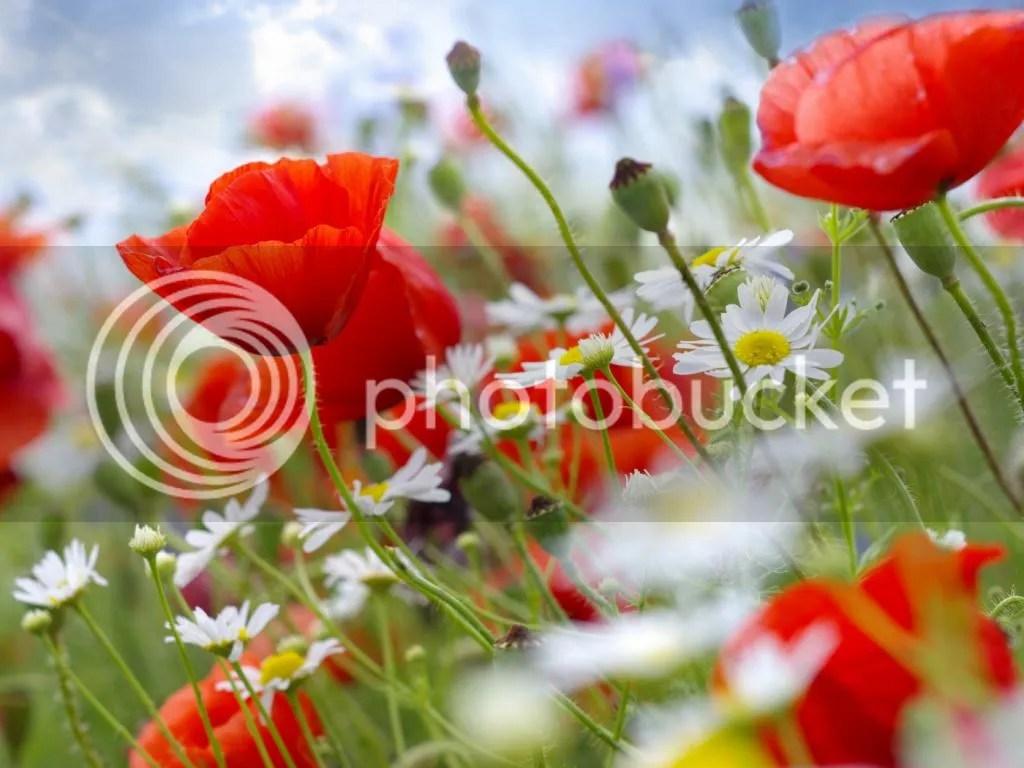 photo flowers_zps26c6720c.jpg