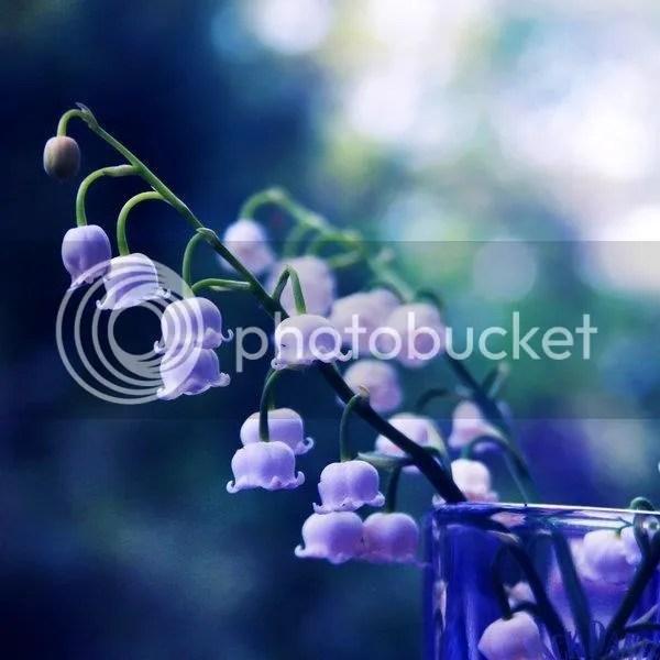 photo purplebluebells2_zps3e1725f5.jpg