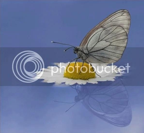 photo Butterfly_zpsx7i042zu.jpg