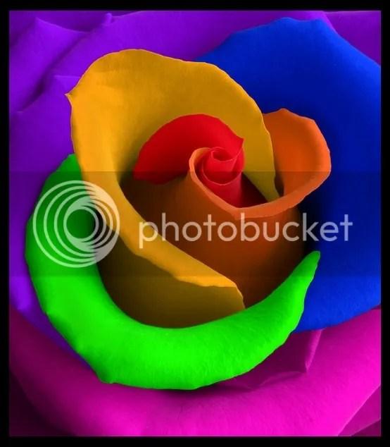 photo rainbowrose_zps23dc6b1a.jpg