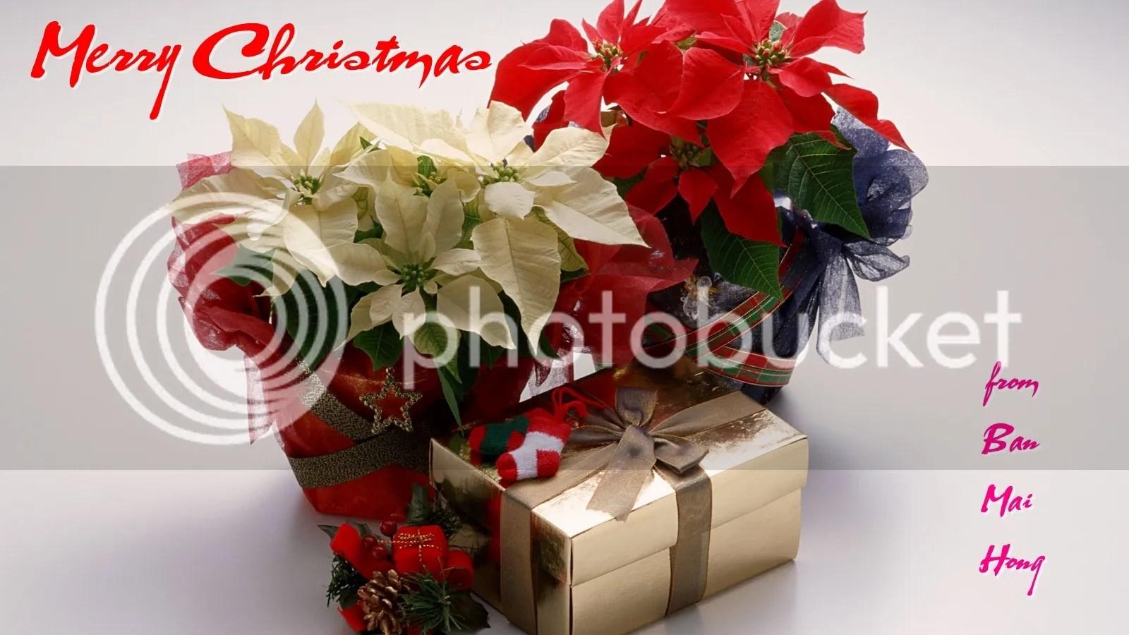 photo Christmas flowers_zps1q8biwqb.jpg