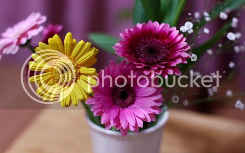 photo Vase 10_zps2gufpkmu.jpg