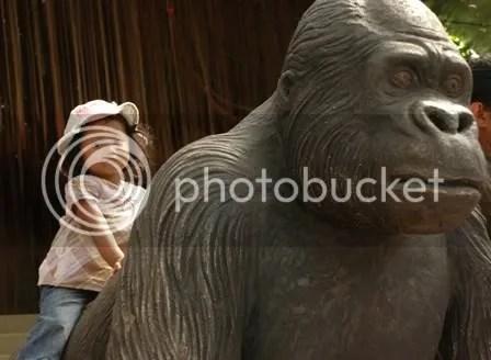 Bukan, bukan gorilla yang ini