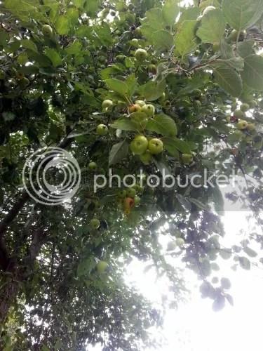 photo 20130905_134335_zps8392a09e.jpg
