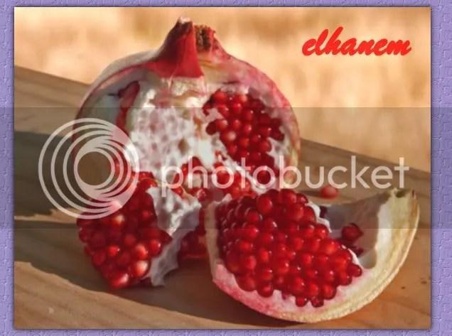 image0011-3.jpg picture by elhanem