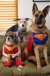 Dog Costumes Pictures, Images and Photos
