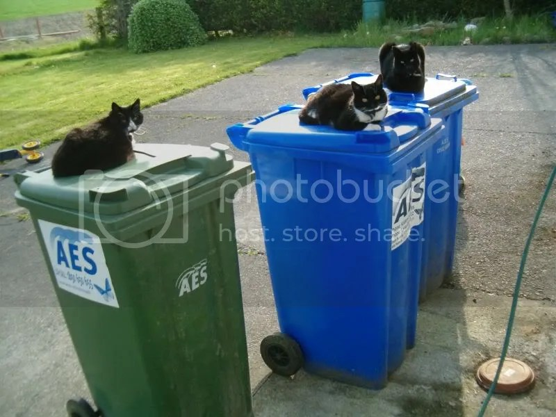Cats and bins Pictures, Images and Photos
