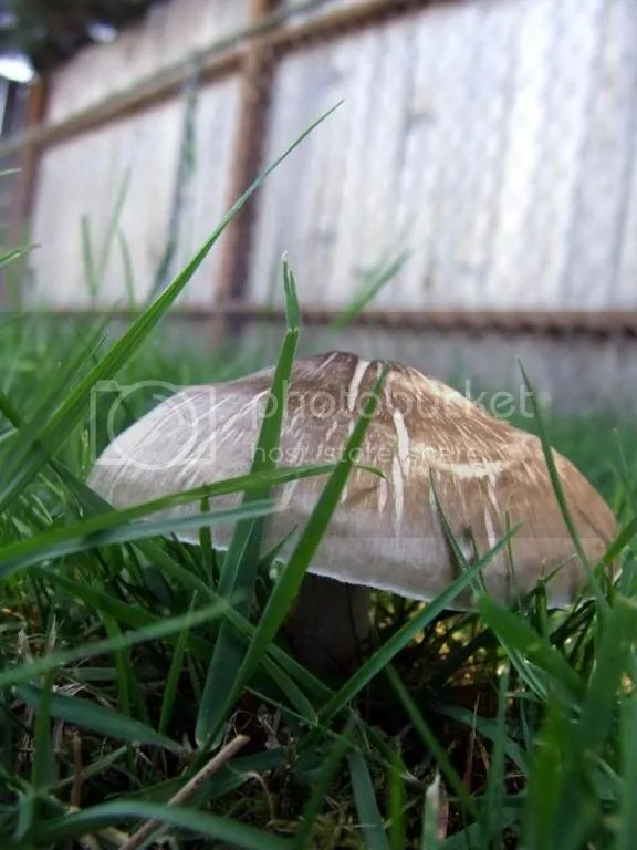 My own grass fungus