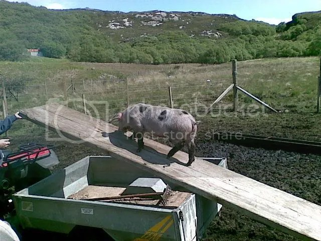 pig on plnk
