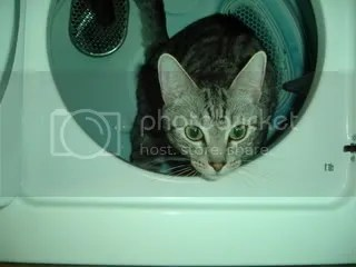 Frick in the dryer