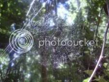 Spider web (c) Lynda Bernhardt