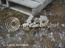 Animal skull (c) Lynda Bernhardt