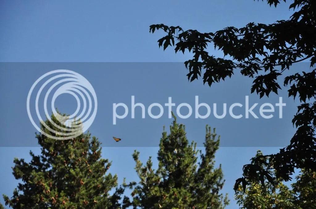 photo DSC_0699.jpg