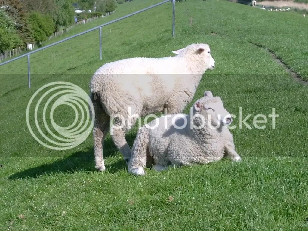Wollproduzenten