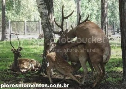 Suruba animal #2