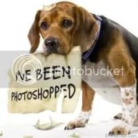 Cute Dog Pic
