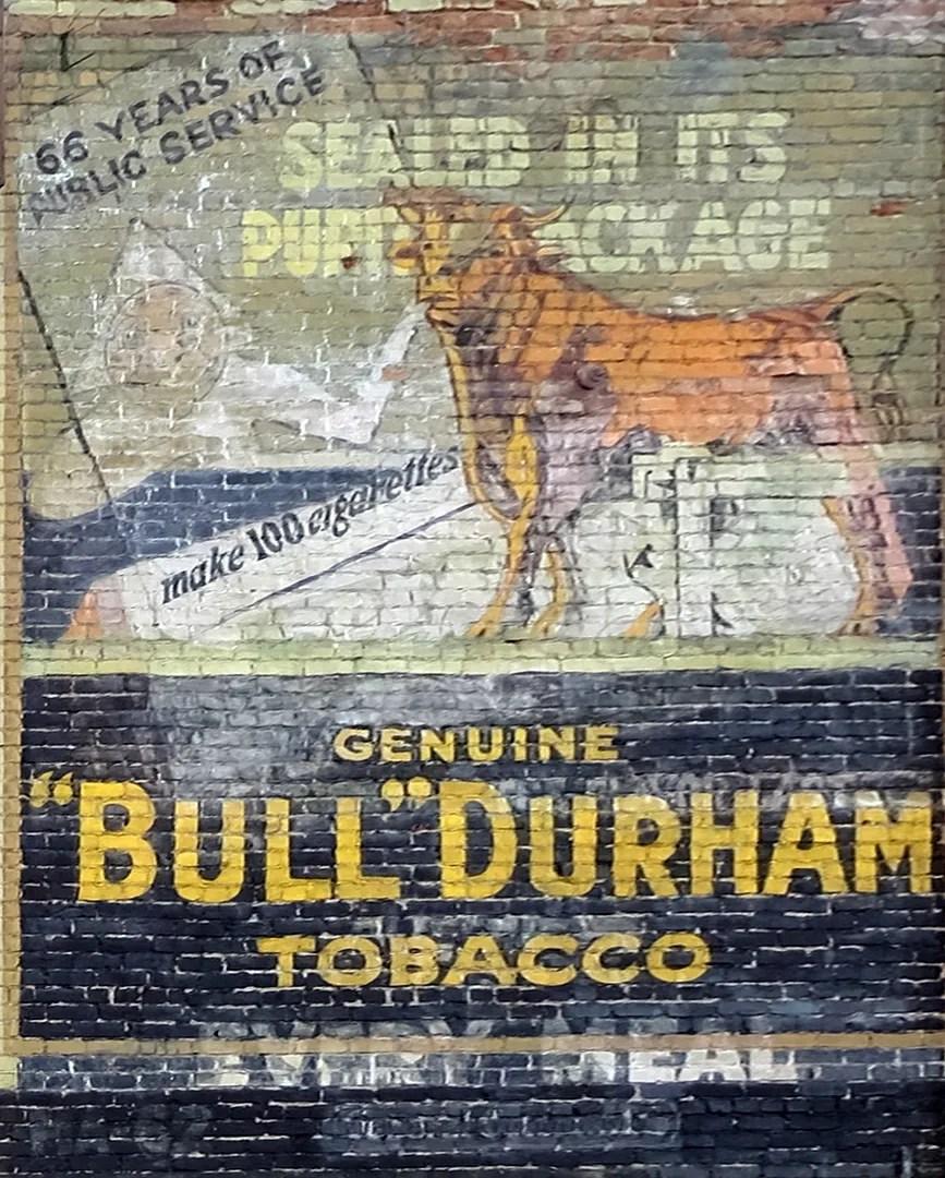 photo Bull - Copy.jpg