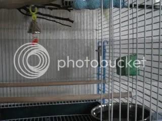 Empty cage?