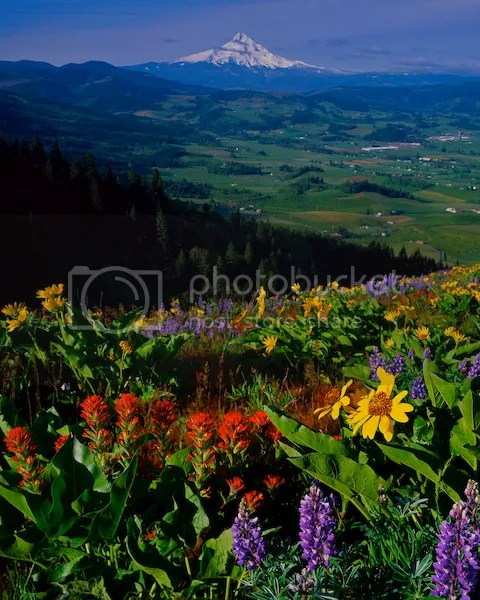 Spring wild flowers Pictures, Images and Photos