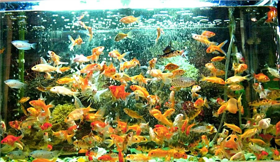 This is my favorite aquarium.  Viewing so many fishes constantly moving is totally mesmerizing.  I love it.