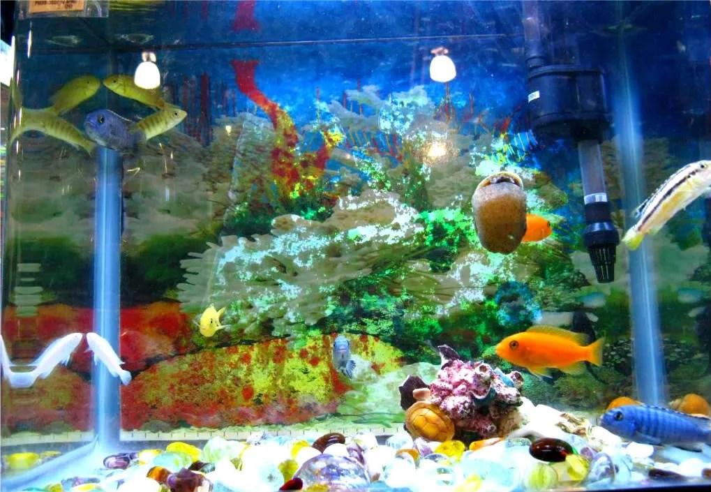 View of one aquarium displaying cute tropical fishes at El Machetazo.