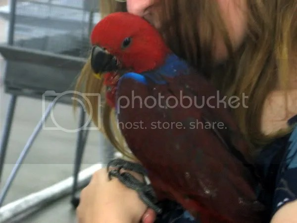 Me with a female Eclectus. She is red with accents of deep purple and blue.