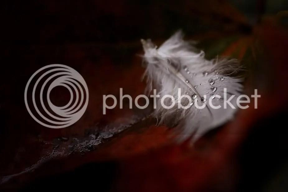 NovemberRainJoeChip.jpg picture by WeissHafen