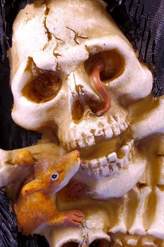 http://www.dreamstime.com/skull-rimagefree196974-resi3198752