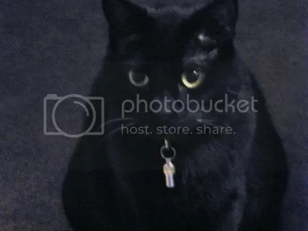 A black cat sitting hunched over and looking grumpy