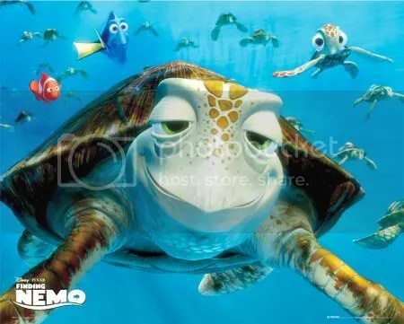 turtle finding nemo Pictures, Images and Photos