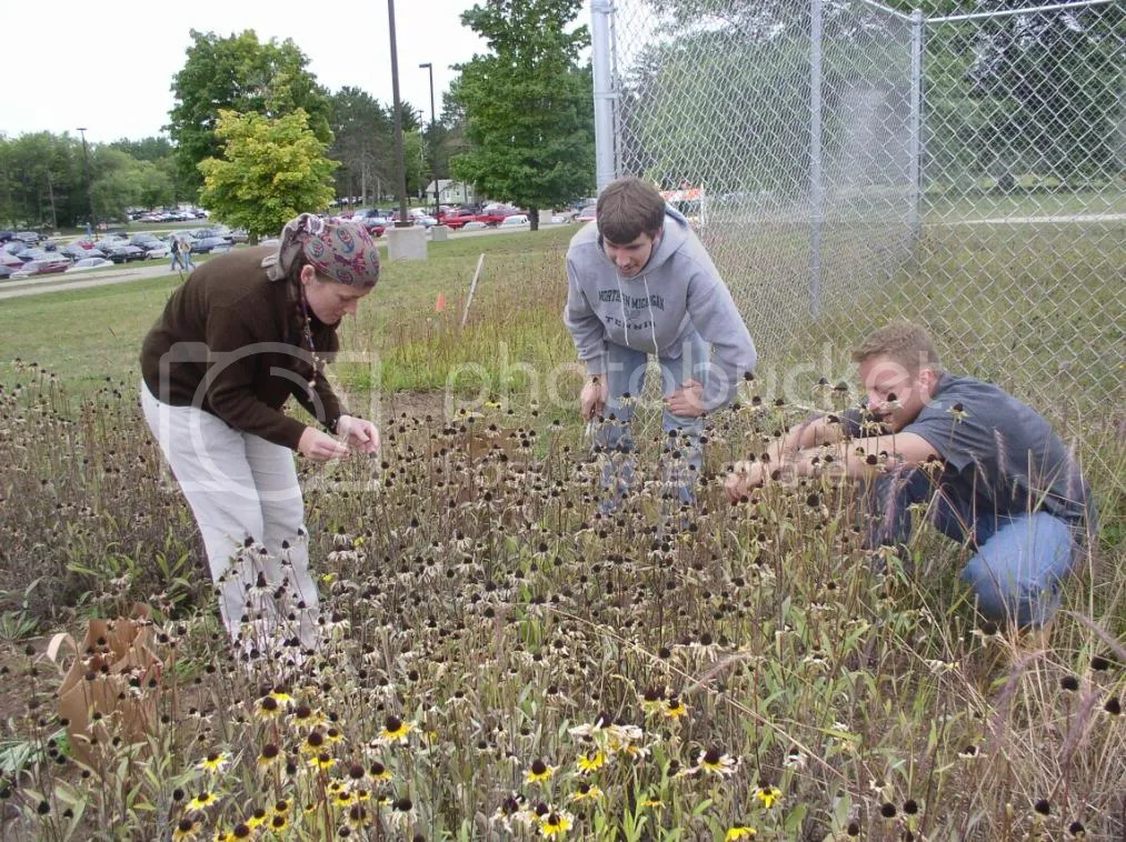 NMU students put loving care into the five-acre Native Plants Project on the north side of campus (NMU Native Plant Project Photos by Professor Dr. Ronald Sundell)