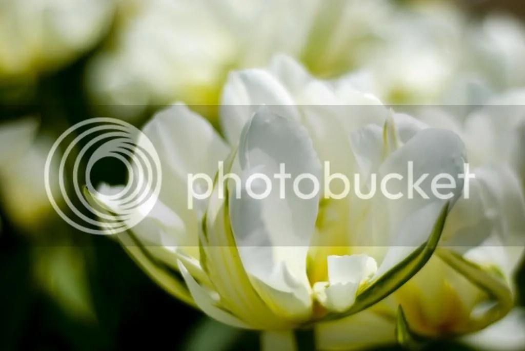 photo DSC_1147_zpsca5eb59f.jpg