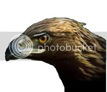 Vulturu Plesuv Furat de Pe Discovery